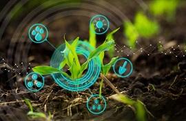 Salute delle piante - Plant Health