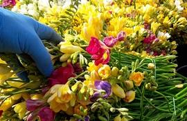 sostegno alla floricoltura