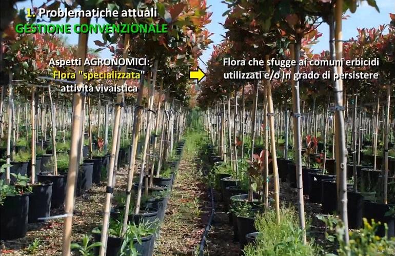 Gestione fitosanitaria: corso di Autofitoviv