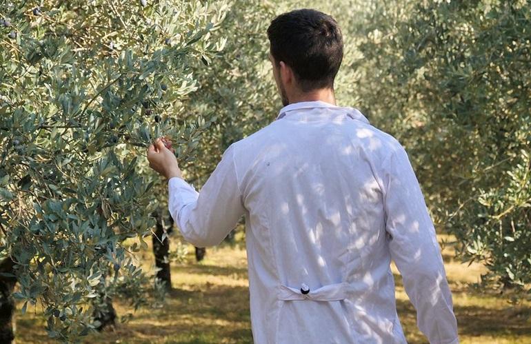 controlli su olivi per Xylella