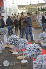 Report christmas flower trends 2015_9
