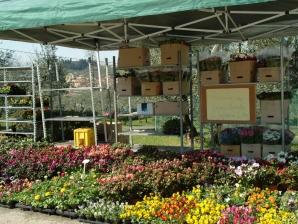 Floraviva Floraviva: mostra mercato dei prodotti del florovivaismo 2009
