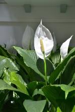 piante e fiori_10