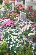 piante e fiori_13