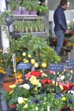 piante e fiori_14