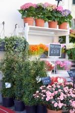 piante e fiori_15