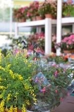 piante e fiori_16