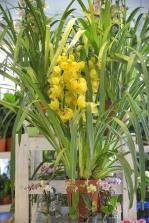 piante e fiori_18