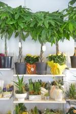 piante e fiori_19