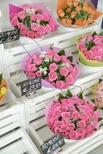 piante e fiori_1