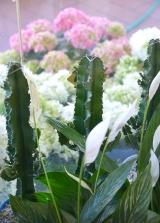 piante e fiori_20