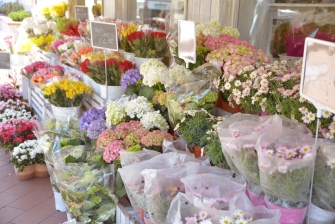 piante e fiori_21