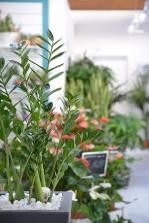 piante e fiori_2