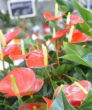 piante e fiori_3