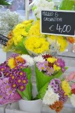 piante e fiori_4