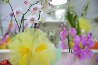 piante e fiori_5