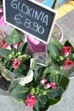piante e fiori_7