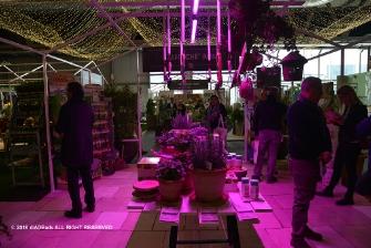 MyPlant & Garden 2018-4