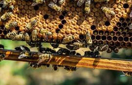 Emergenza apicoltura: causa il riscaldamento climatico
