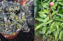 Avvertenze colturali e fitosanitarie sulle coltivazioni di stagione