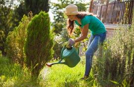 Orto, giardino e frutteto: cosa fare ad agosto