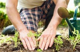 Maggio: cosa fare in orto, uliveto e frutteto