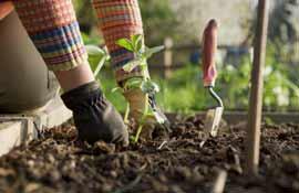 Novembre: i consigli per orto, giardino, frutteto e vigneto