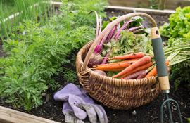 Orto, giardino, frutteto e oliveto: cosa fare a novembre