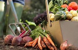 Orto, giardino, frutteto e vigneto: cosa fare a ottobre