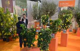 Vivai Rosellini Gabriele a Myplant: olivi Xylella free, agrumi e mimose in ascesa