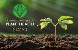 Incontro online sulla salute delle piante: apre Bellanova