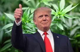 USA: il Farm Bill di Donald Trump legalizza produzione e commercio di canapa